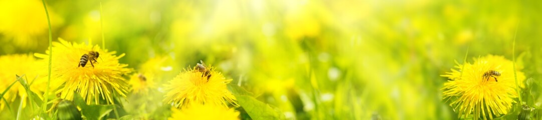 Honey bees on  summer flower meadow