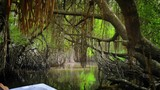 Cruising along mangrove roots deep in wetlands of Sri Lanka coast. Natural beauty and diverse wildlife adventure background inside tropical forest with twisted tree branches and green foliage - 197324476