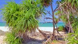 Exotic tropical plants on sandy beach of sea coast with blue sky and ocean water - 197325012