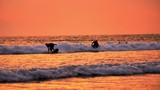 Surfers ride surfboards on sea waves at beautiful sunset in Bali island. Summer water sport activity slow motion video - 197325497