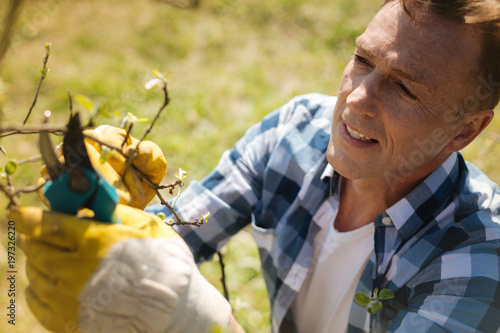 Sharp secateurs. Pleasant concentrated man pruning a tree with a pruner while enjoying gardening in spring