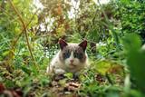Ragdoll cat sitting in the garden