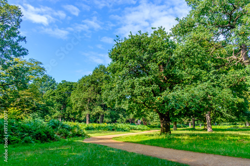 Fotobehang Groene Path in a English park in summer