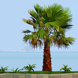 painted palm tree on green grass next to the sea - 197340633