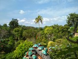 Insects on the background of tropical vegetation - 197366458
