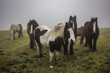 Horses on the moor