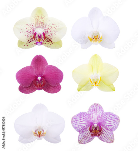 Orchid blossom heads isolated on white - 197380626