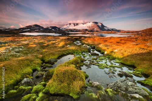 Fotobehang Lavendel Norwegian glacier