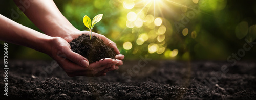 Plant in Hands. Ecology concept. Nature Background © Maksim Pasko