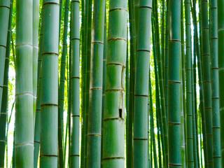 Bambus Hintergrund Wald Stangen © prempict