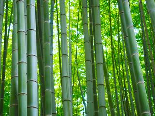 Bambus Wald Hintergrund © prempict
