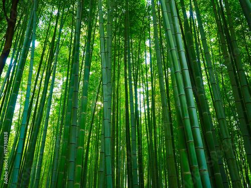 Foto op Plexiglas Groene Bambus Hintergrund Wald