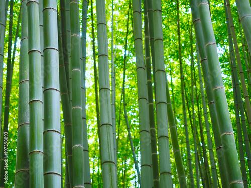 Canvas Bamboe Bambus Wald Hintergrund