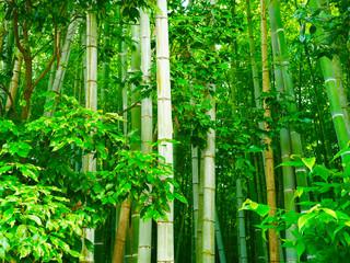 Bambus Hintergrund Wald © prempict