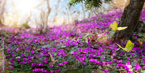 abstrakcyjny charakter wiosny Tło; wiosenny kwiat i motyl