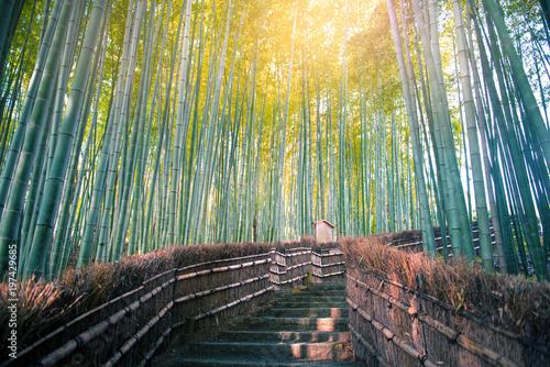 Plexiglas Kyoto Arashiyama bamboo forest in Kyoto, Japan.