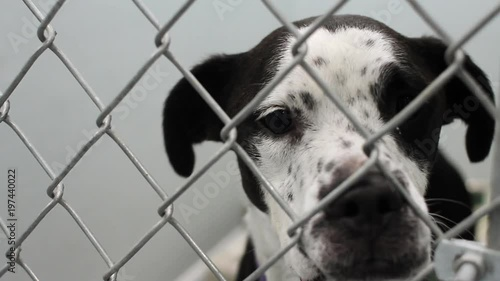 A close up shot of a dog standing in his kennel at a shelter.