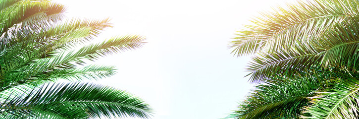 Tropical green palm leaves and branches on blue sky with copy space. Sunny day, summer concept. Sun over palm trees. Travel, holiday background. Banner