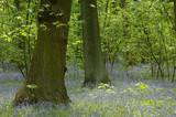 environnement fleurs printemps bois arbres foret