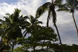 Palmen in der Karibik - 197462265
