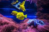 pesci colorati tropicali in acquario - 197465229