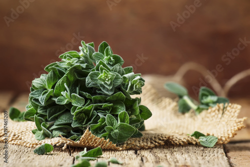 Fresh green oregano or Origanum vulgare in a beam, vintage wood background, selective focus