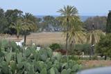 green summer field in northern Cyprus - 197495013