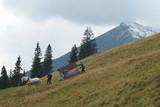 Tatry Wysokie, Polska - Rusinowa Polana, górale z koniem zsuwają drewniany domek po zboczu