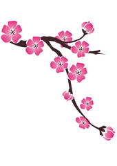 Branch of cherry blossoms on a white background in the drawing