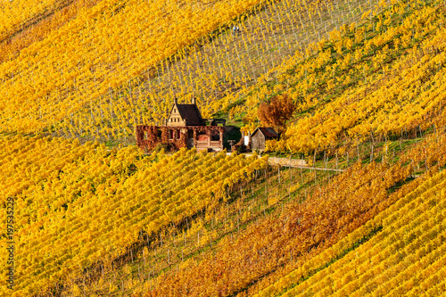 Deurstickers Wijngaard Weinberge mit historischem Weinberghaus im Herbst