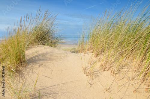 Keuken foto achterwand Beige dunes sous le soleil