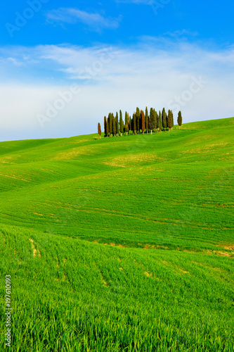 Keuken foto achterwand Toscane Iconic Tuscany Landscape with Cypress Trees in Green Field