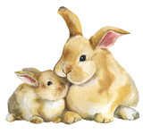 Rabbit.Mother and baby.