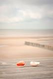 coquillage sur la plage au coucher du soleil