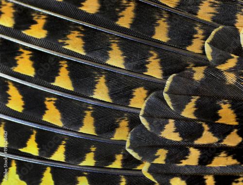 Kolorowe pióra zbliżenia ptaków składane w rzędzie jak wentylator