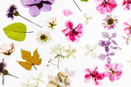 Foto op Canvas Klaprozen colorful dry flowers