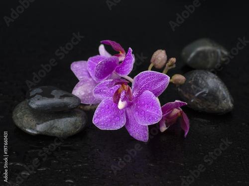Foto op Canvas Zen orchid flowers on a black background.