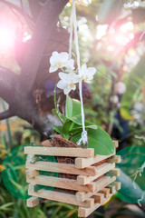 White Orchid in a wooden tub hanging on a tree