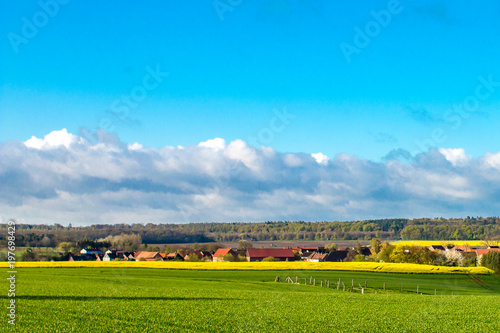 Fotobehang Blauw Kornfeld und Rapsfeld im Frühjahr