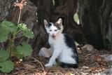 Katzen_Cats