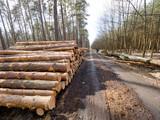 Kłody drewna ułożono na leśnej drodze oczekujące na wywóz