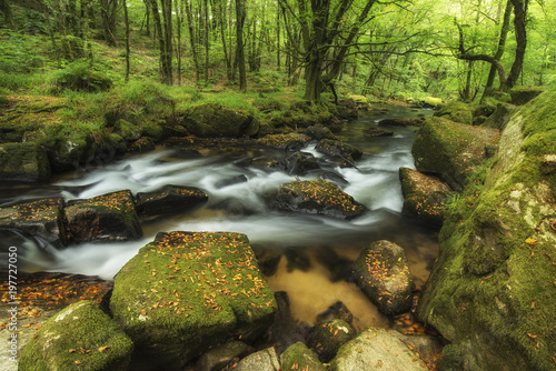 Beautiful vibrant lush landscape of Golitha Falls in Devon in Summer