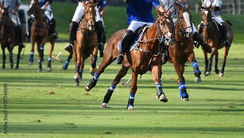 Fotobehang Paarden Horses Polo Run In The Game.