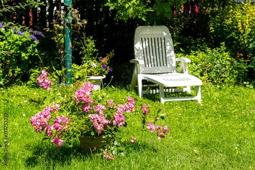 Beautifful summer garden with blooming pink roses and a white deckchair.