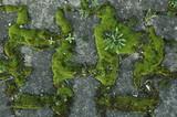 hiéroglyphes en mousse