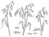 Oat plant graphic black white isolated sketch illustration vector  - 197829621