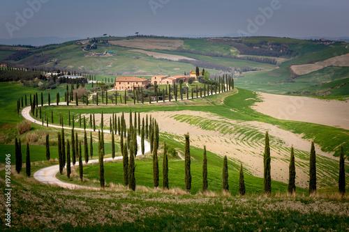 Tuscany, Crete Senesi rolling hills with cypress trees