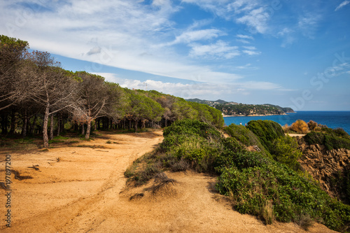 Edge Of The Forest Path On Costa Brava