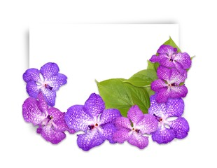 Template greeting card with orchid flowers and green leaves