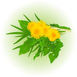 bouquet of realistic dandelion flowers with leaves and grass. Elements for design.